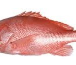 cleanredsnapper